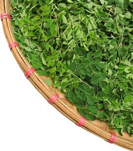 clevisto der gesundheitsschutz versand hilft clever sch tzen moringa oleifera die. Black Bedroom Furniture Sets. Home Design Ideas